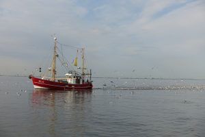 Elbefischer
